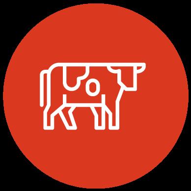 Optimale penswerking voor koeien | SEKO voermengwagen